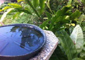 Antes de viajar, tire a água dos vasos de plantas e guarde a vasilha de água e de comida dos animais de estimação.
